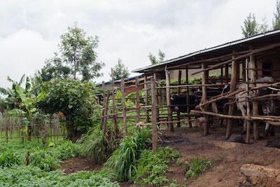Send a Cow Rwanda