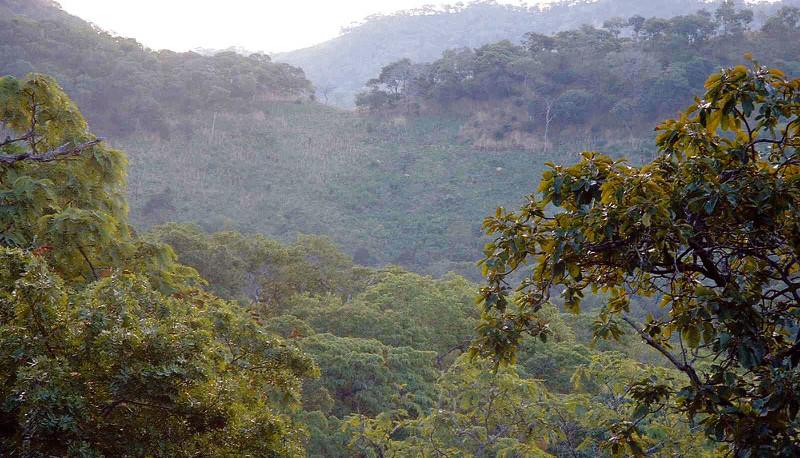 Scenery in Rwanda