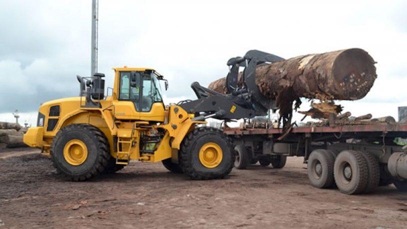 Exploitation du bois au Cameroun