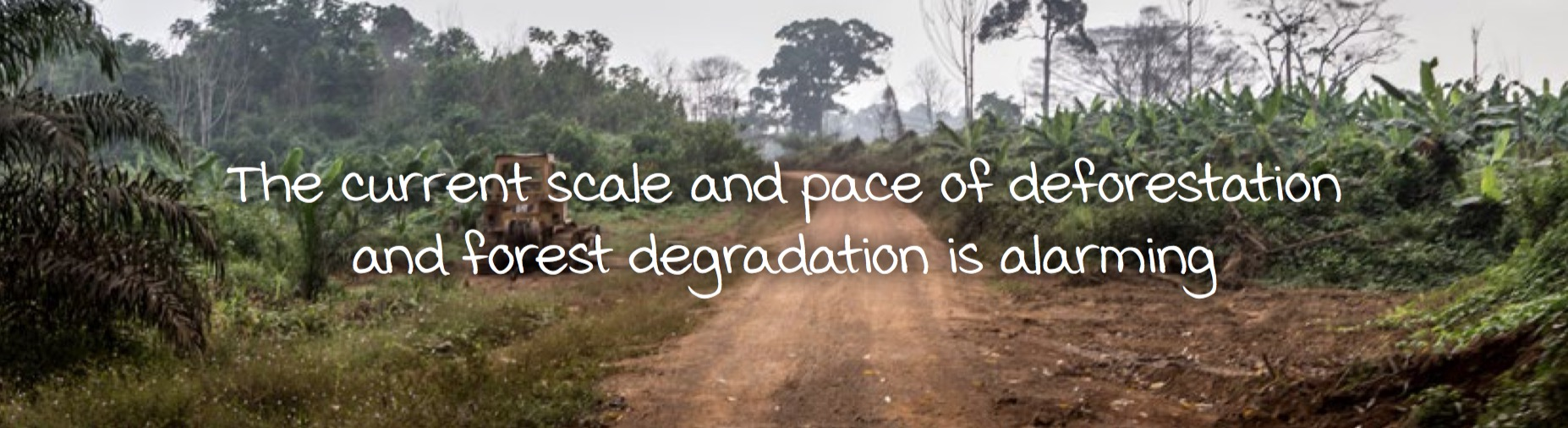 The current scale and pace of deforestation and forest degradation is alarming