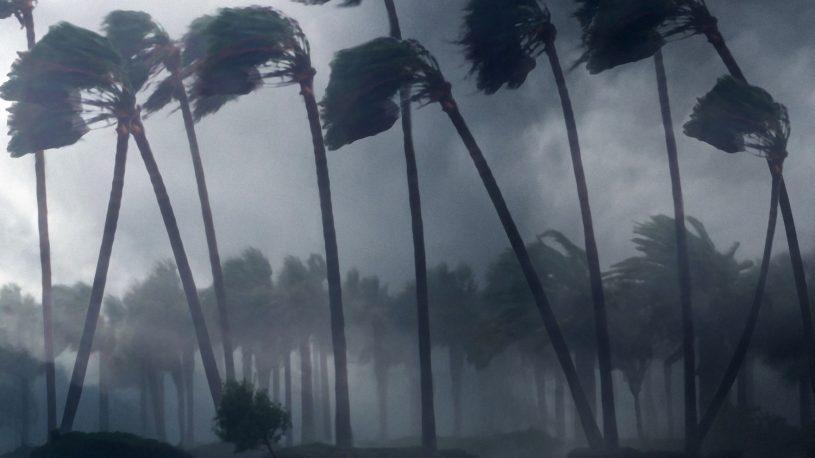 Trees in hurricane